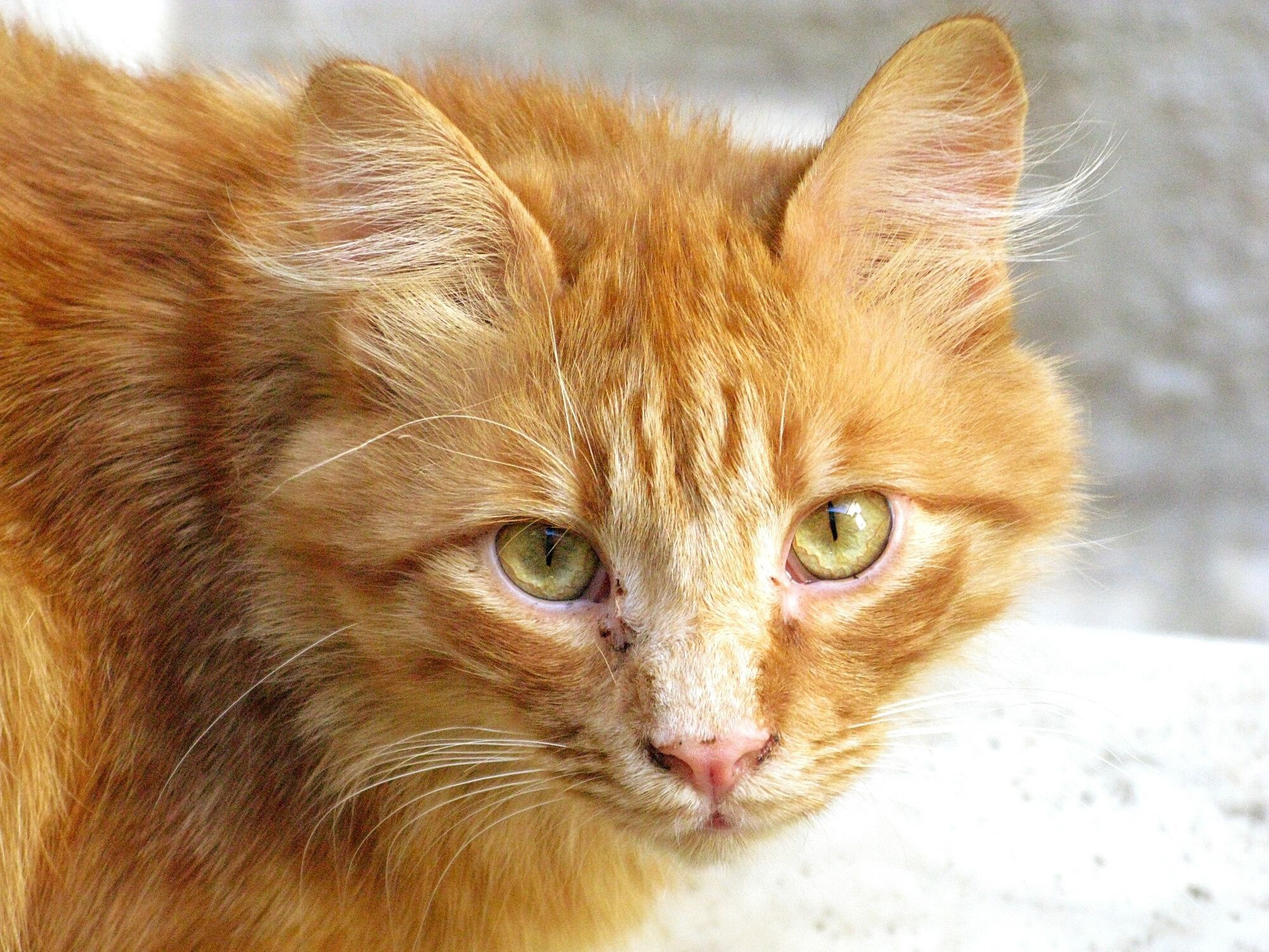 What Are Those Black Spots On My Cat S Face With Images Tabby Cat Cat Facts Orange Tabby Cats