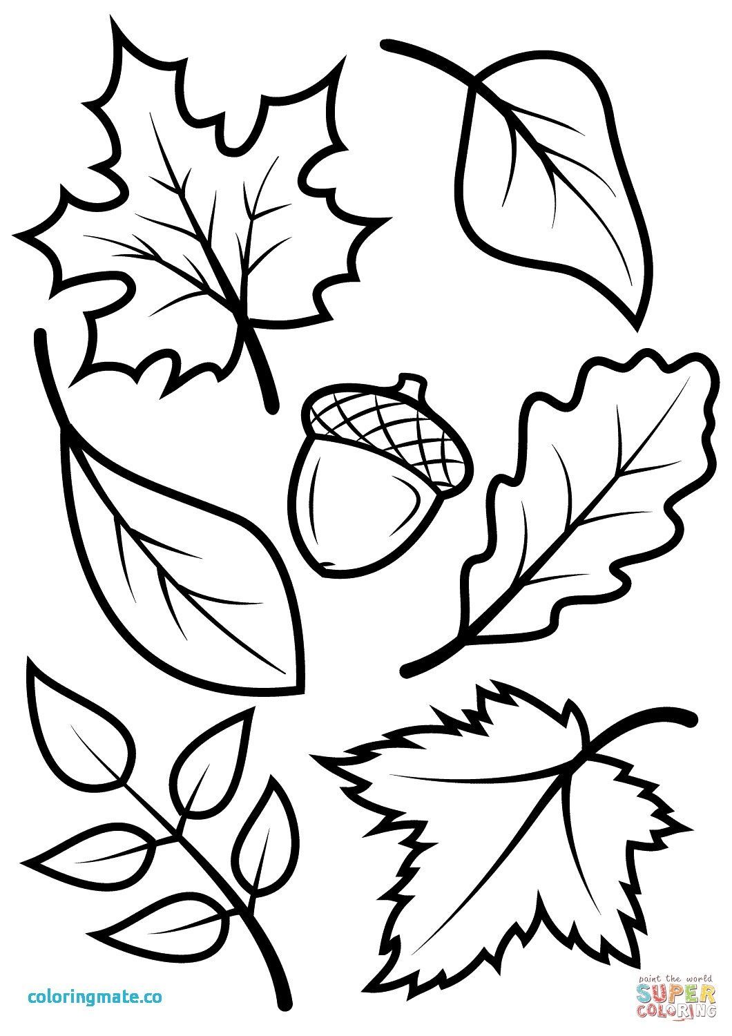 26+ Printable leaves coloring pages info