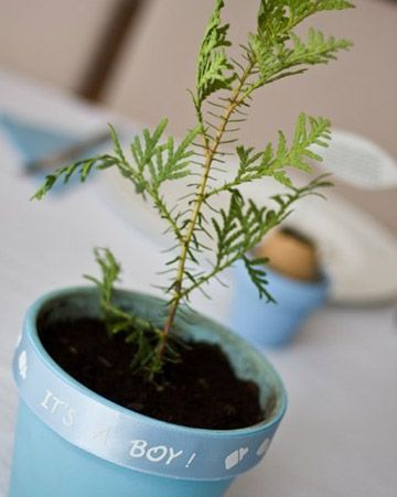 """Baby Cedar Trees    """"I bought baby cedar trees from a local tree farm to use as centerpieces,"""" writes KRo. """"I painted the pots baby blue and added an 'it's a boy' ribbon around the top. They were a hit, and guests were invited to bring them home to plant in their yard.""""        Read more at Marthastewart.com: Your Baby Showers"""