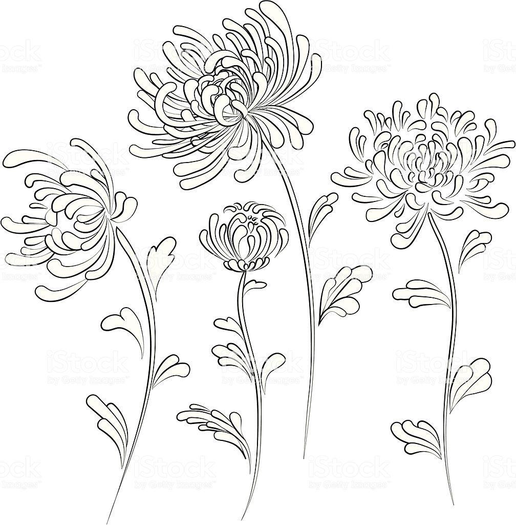 Chrysanthemum Chrysanthemum Tattoo Chrysanthemum Drawing Chrysanthemum