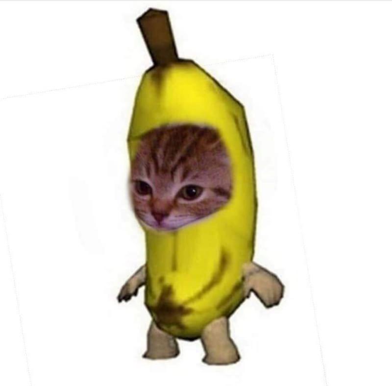 Pin By Cherrytz On Alien Funny Memes Cute Memes Animal Memes
