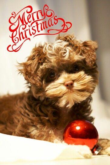 Bolonka Zwetna Merry Christmas Teddy Bear Animals Axl Rose