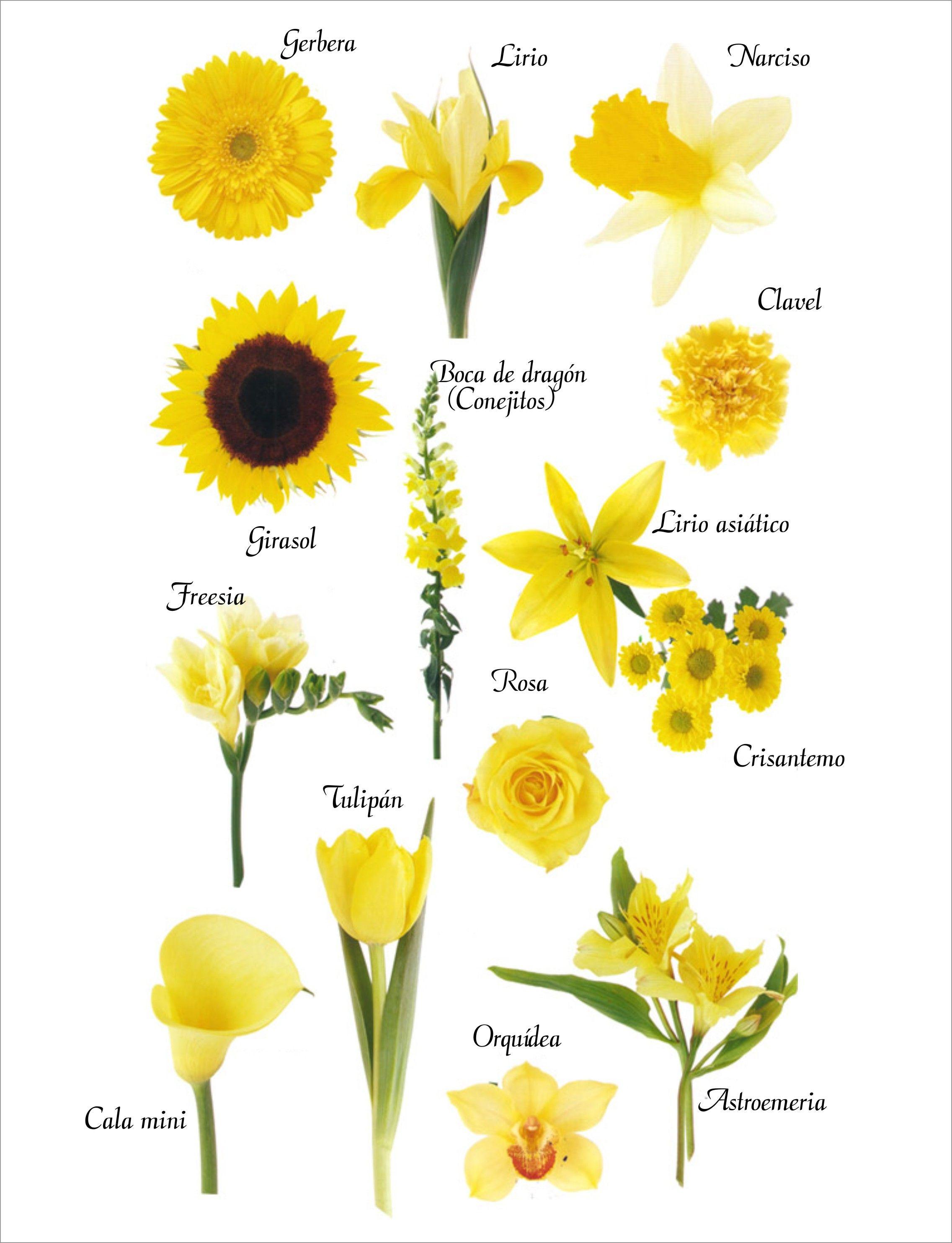 Con gran abundancia en la primavera las tonalidades de - Clase de flores y sus nombres ...