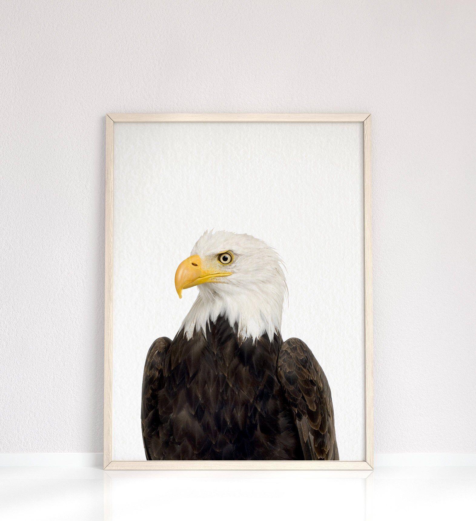 Bald Eagle Wall Art American Eagle Print Peekaboo Nursery Etsy Eagle Wall Art Framed Art Prints Noir Gallery
