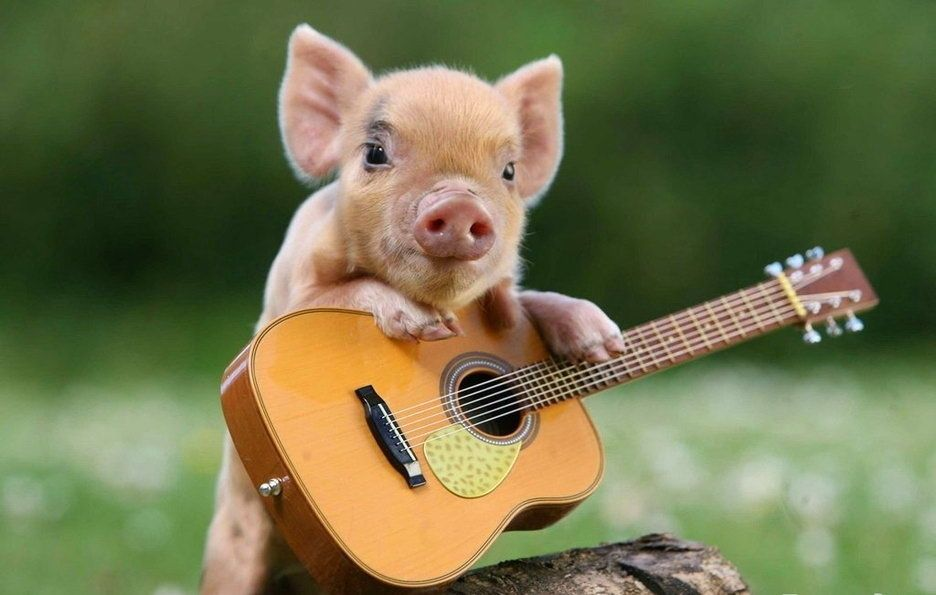 Allow Me To Sing You A Song  Animals  Teacup Pigs -4429