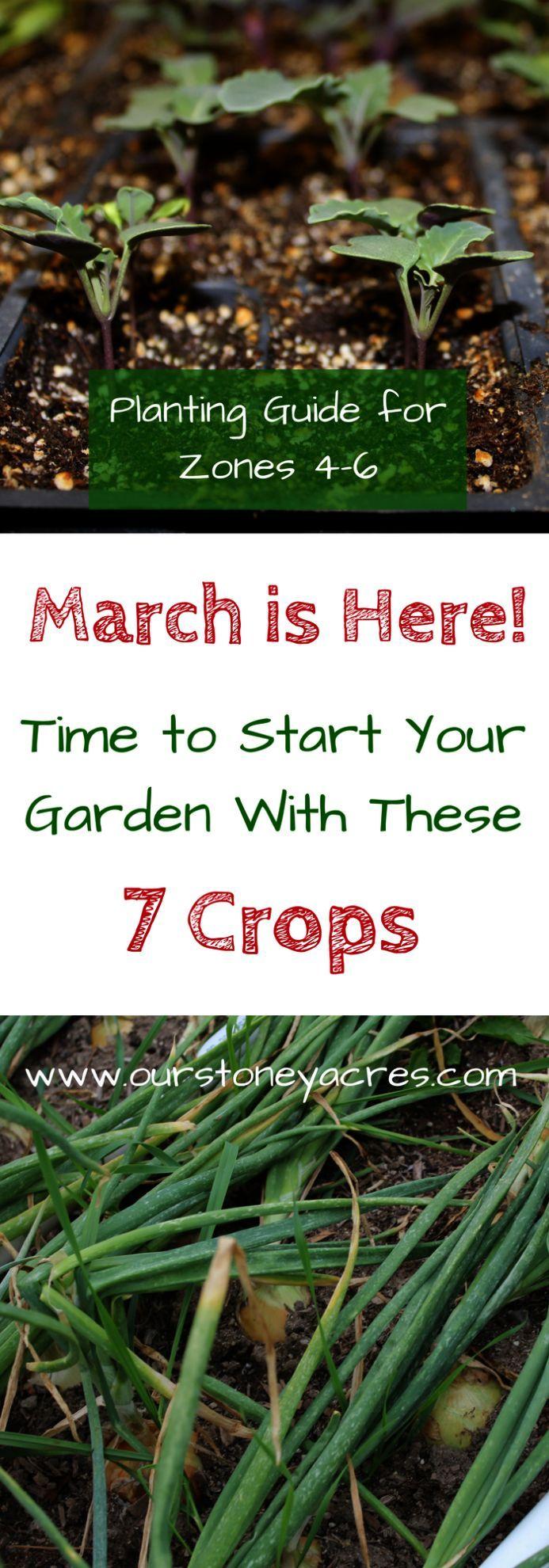 Anfanger Bohnen Etwas Fur Gardening Gardening For Beginners Uk Gartenarbeit Gartentipps Grune Hat Gartentipps Gartenarbeit Fur Anfanger Gartenarten