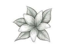 Jasmine Flower Tattoo Google Search Tatuaje De Jazmin Dibujos