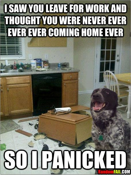 He ripped down the top cabinet but not the bottom? Dog fail