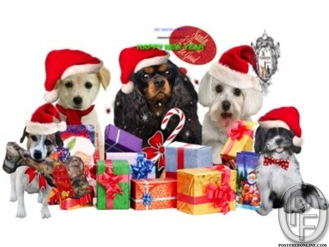 Pet Shop For Dog In South West Delhi Delhi India In Pet Animals