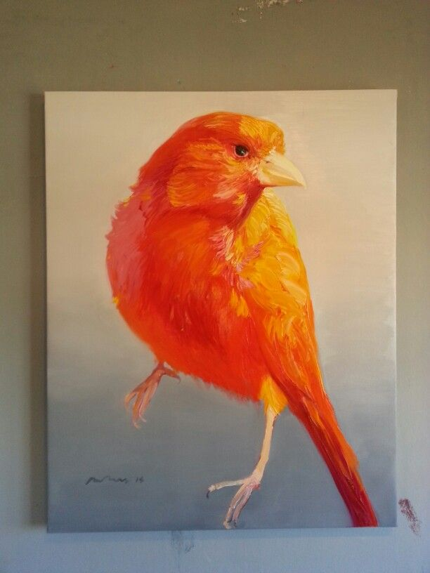 Orange Fellow