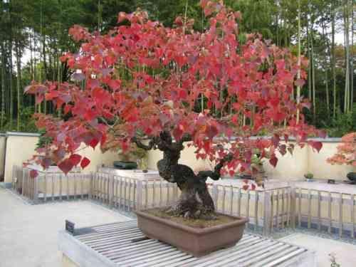 Petit jardin zen  108 suggestions pour choisir votre style zen Bonsai
