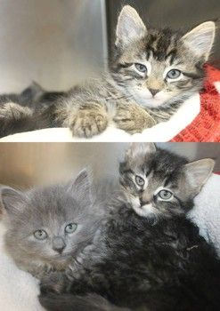 Urgent Fluffies Time Has Run Out For Beautiful Kitten Family At High Kill Sc Shelter Time Up Can Be P Cute Cats And Kittens Beautiful Kittens Cat Adoption