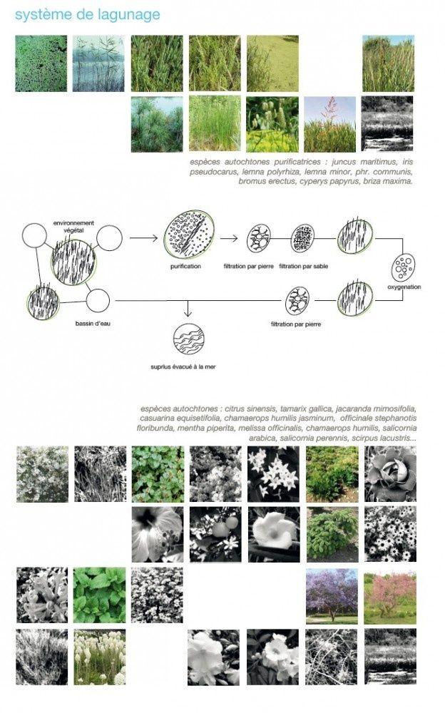 Image Result For Design Concept Rain Garden Board Landscape Architect Landscape Architecture Landscape Design Landscape Plans