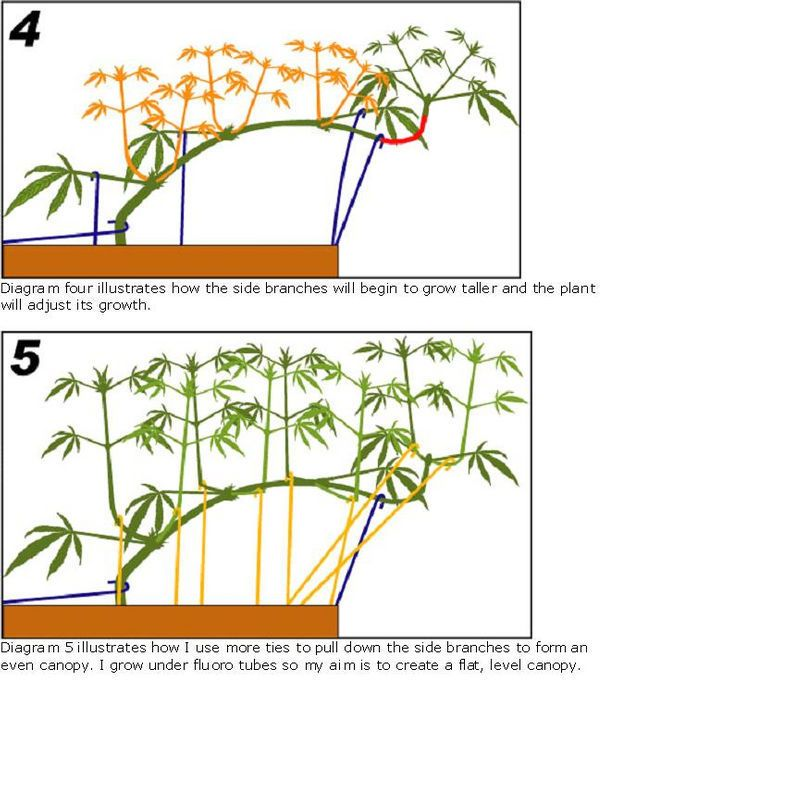Growing cannabis with ebb flow flood drain hydroponics diagram growing cannabis with ebb flow flood drain hydroponics diagram moving gif shows how everything works cannabis pinterest moving gif ccuart Image collections