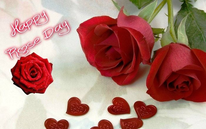 Rose Day Images 2016 Happy Rose Day 2016 Images Rose Valentine Cute Rose