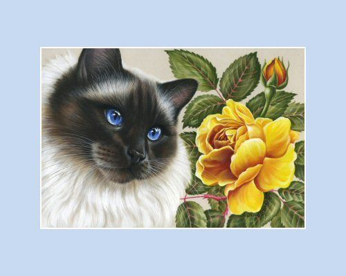 Details About Botanical Cat Aceo Print Yellow Rose By Irina Garmashova In 2019 Irina Garmashova Cawton Birman Cat Yellow Cat Cat Art