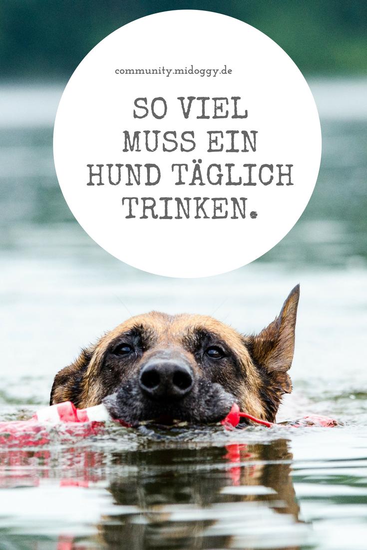 Wie Viel Muss Mein Hund Trinken Hunde Hundeschule Und Hund Angst