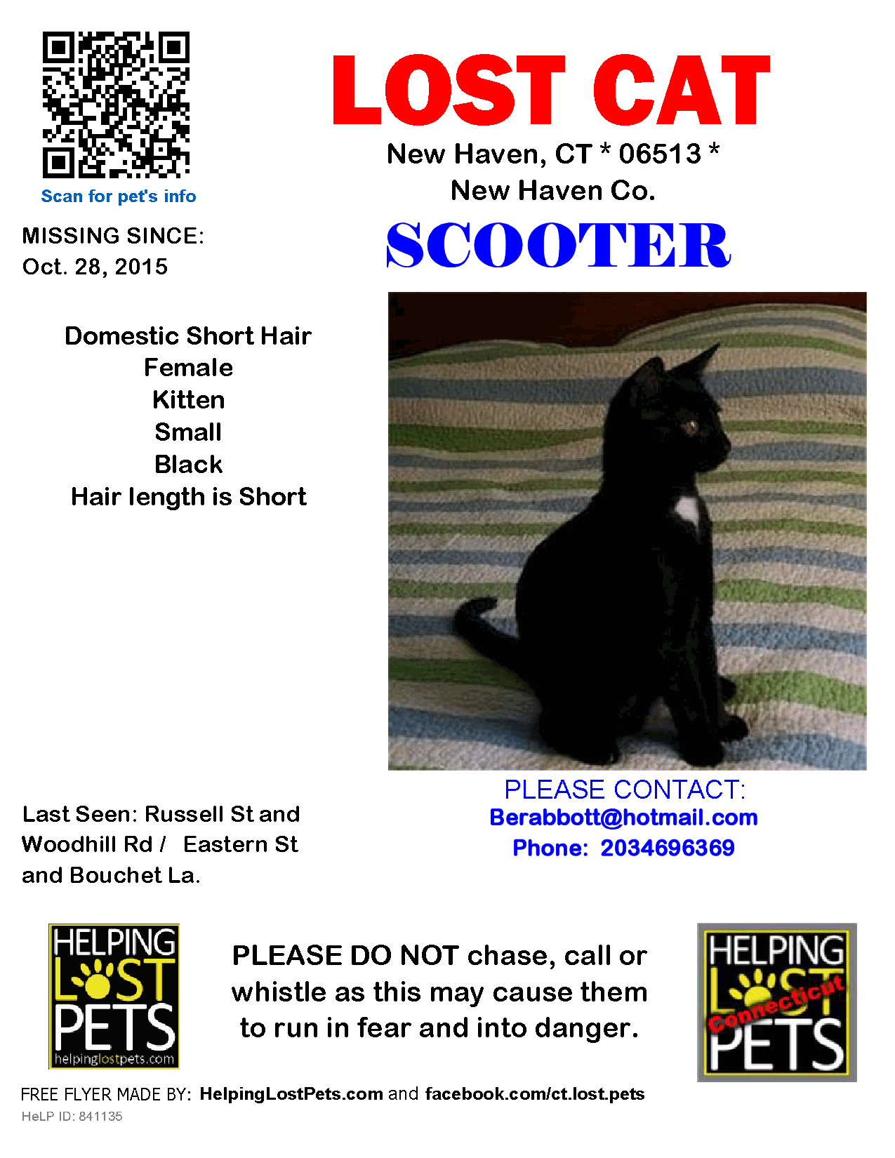 Black Whitwlost Cat Domestic Short Hair New Haven Ct United States Lost Cat Domestic Short Hair Cats