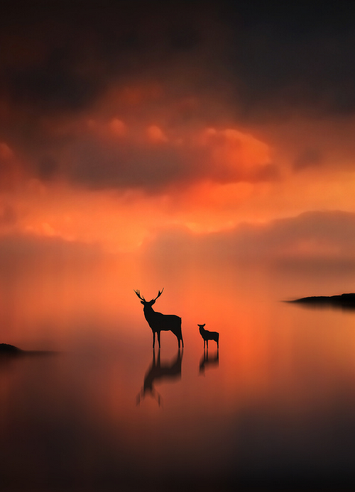 0rient-express:  The Deer at Sunset (by Jenny Woodward).