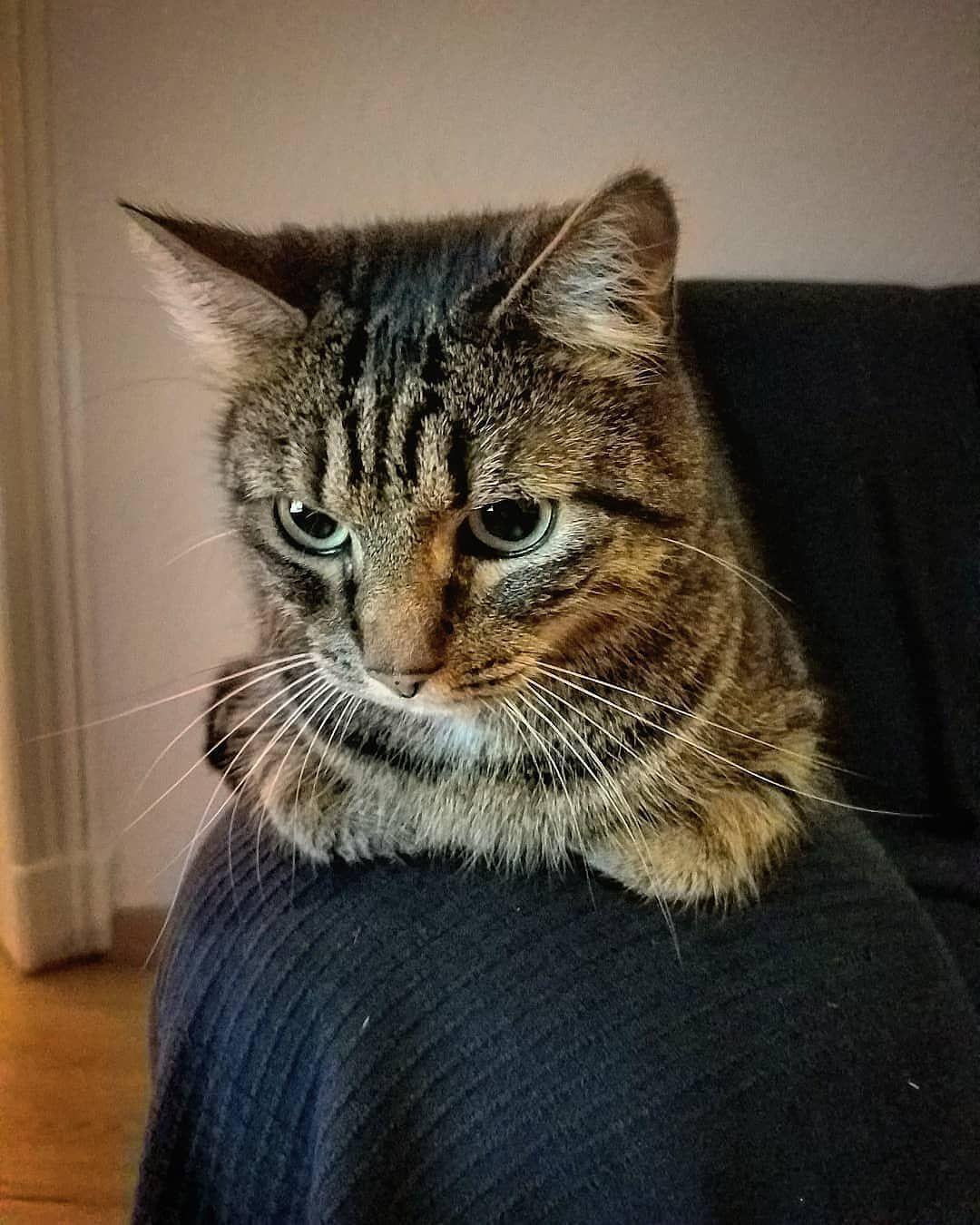 Cat Cats Catsofinstagram Cats Of Instagram Instacat Katzen Sophokles Furry Pet Pets Instapet Katze Kitte Cats Best Pet Insurance Cats Of Instagram