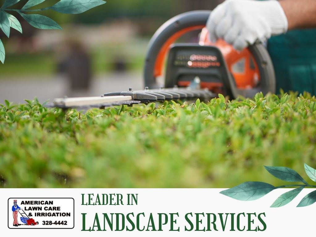 Best Lawn Care Service For Weeds
