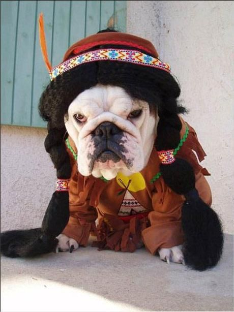 Baggy Bulldogs Timeline Photos English Bulldog Funny Bulldog Dog Halloween Costumes