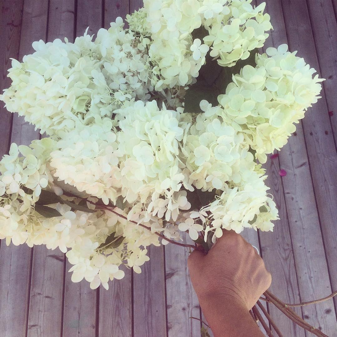 "38 Likes, 3 Comments - Marilou Hamel-Fréchette (@missmariloustudio) on Instagram: ""Hydrangeas from the cottage. Happy Friday! ❤️ Bon vendredi! 💕 #backyardblooms #turtlelakecabinqc…"""