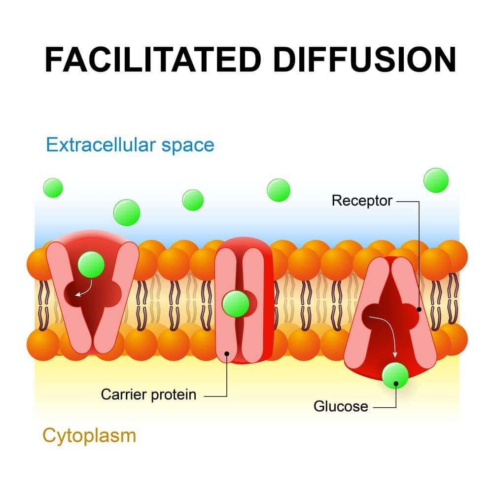 3 Types Of Diffusion Plus Examples For Each Nayturr Cell Transport Biology Classroom Study Biology [ 1000 x 1000 Pixel ]