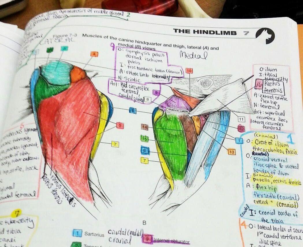 Human Anatomy Drawing Book Pdf Free Download Beautiful ...