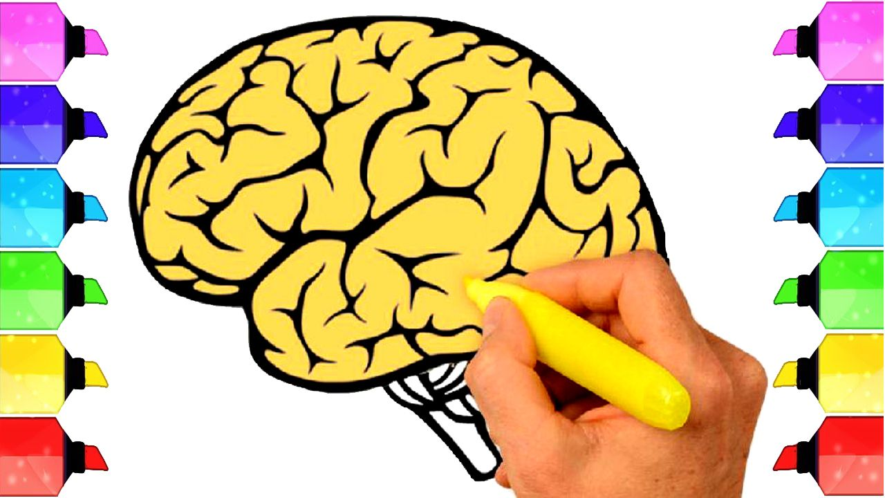 How to draw human brain in easy steps - How to Draw a ...