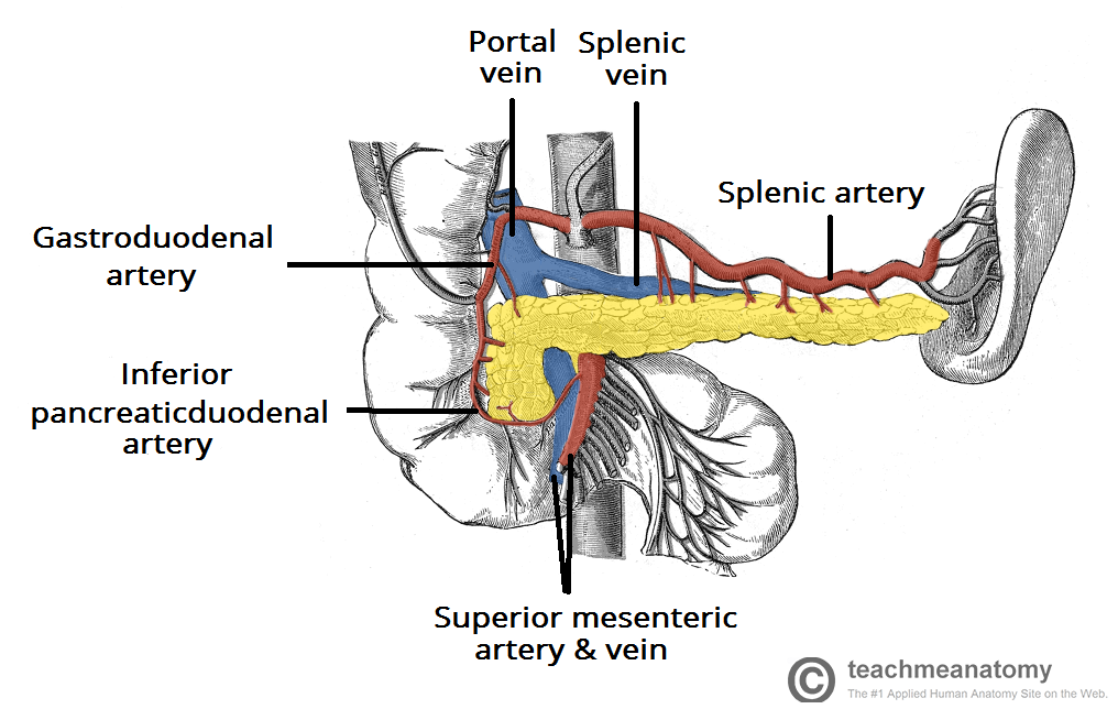 Splenic Artery And Vein As With Other Arteries In The Body The
