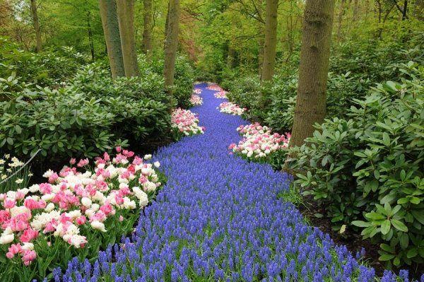 Farbschema Fur Ihre Garten Landschaft Planen Die Besten Farben Wahlen Blumengarten Blumen Anbauen Garten
