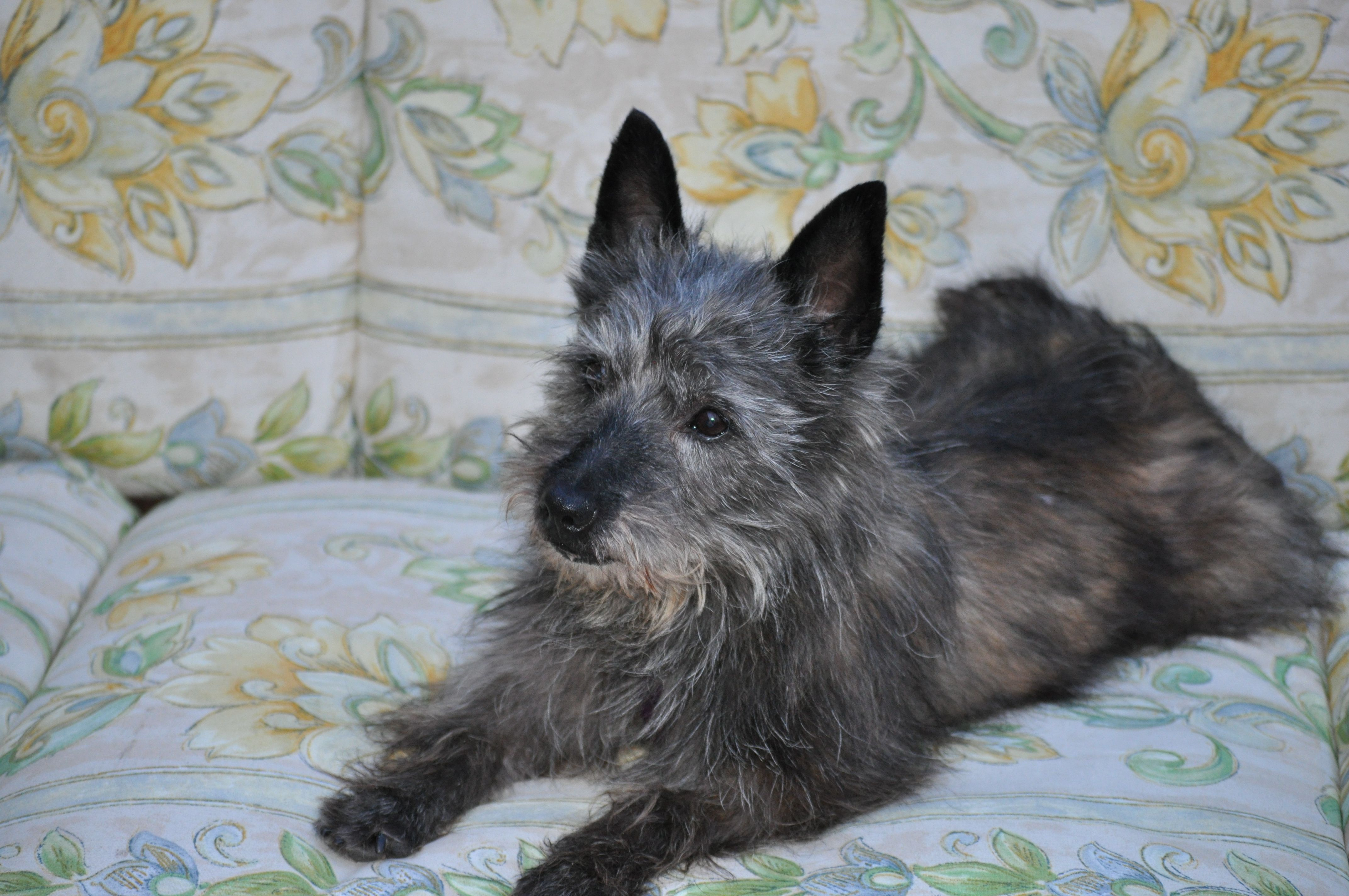 Former Foster Baltimore Buddy From Col Potter Cairn Rescue