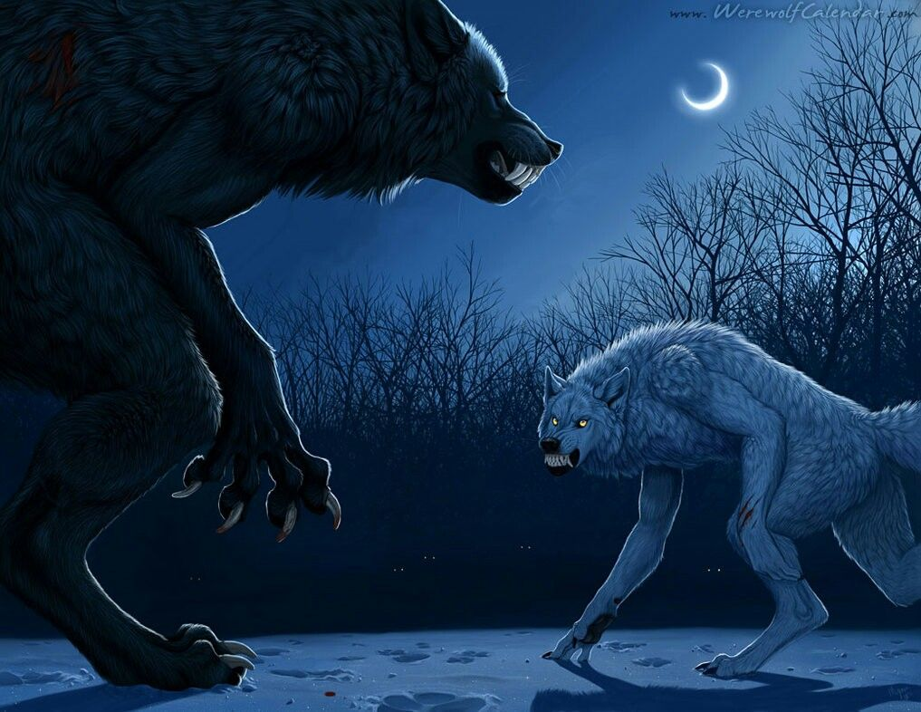 Werewolves🐾: Battle for the title of head Alpha of pack🌙