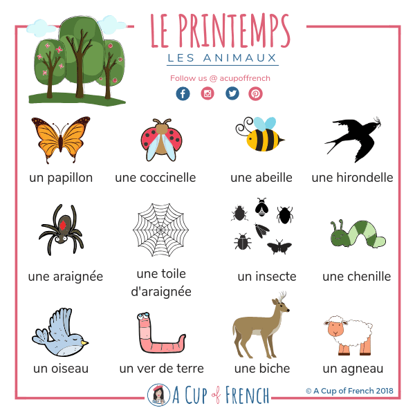 Spring In French Animals A Cup Of French French Vocabulary Learn French Teaching French