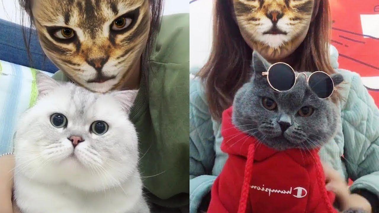 P5 قطط مضحكة جدا مقاطع مضحكة للقطط تحدي الضحك Funny Cute Cats Cats Funny Cat Videos