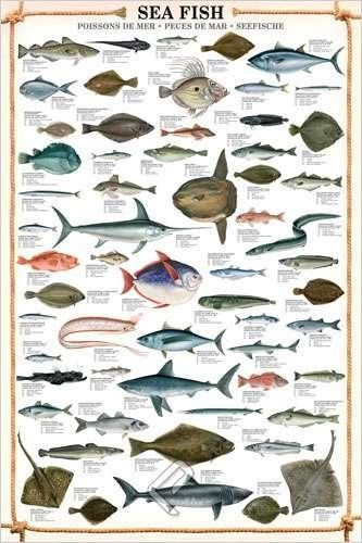 HUGE LAMINATED/ENCAPSULATED Sea Fish POSTER measures approx 36x24 inches (91.5x61cm) by Laminated Posters, http://www.amazon.co.uk/dp/B0096C1YC6/ref=cm_sw_r_pi_dp_TLiXsb1T4EK19