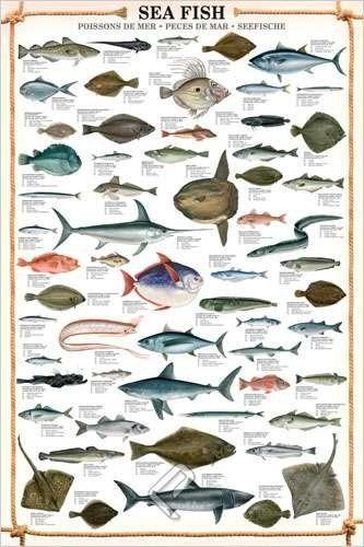 Pin by Fishing on Fly Fishing Pinterest Sea fish, Fish and Amazon
