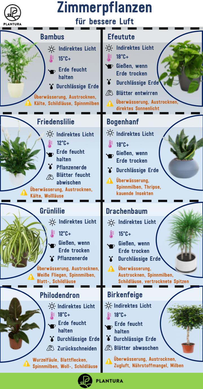Luftreinigende Pflanzen: Die Top 17 - Plantura  Pflanzen