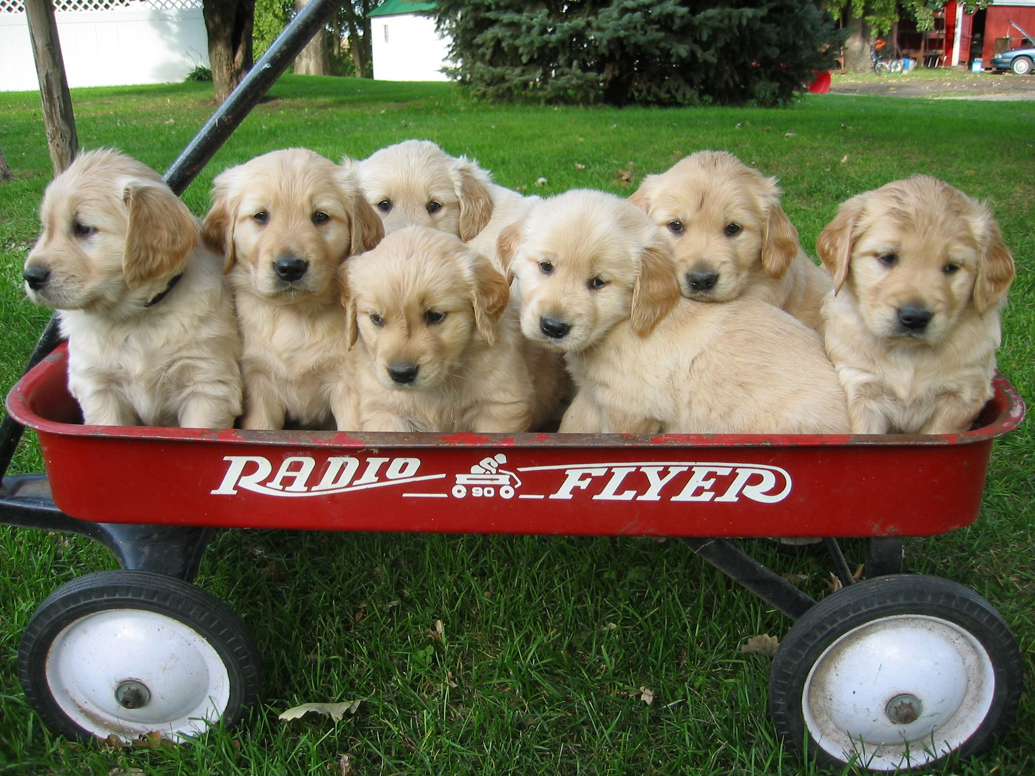 Wagon Full Of Puppies Part Deux Cute Animals Puppies Puppies