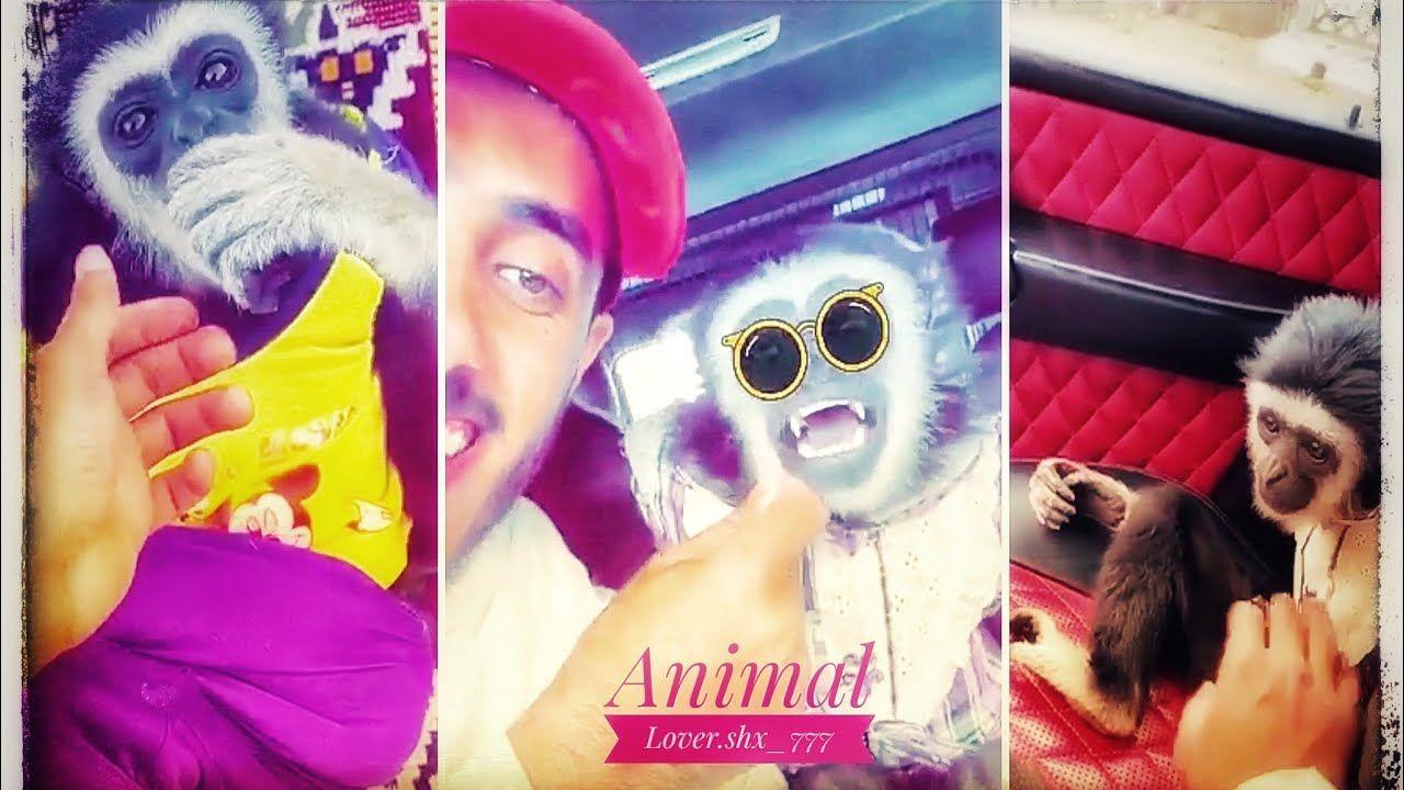 صباح الزيتون مع زيتونه وإلى الرياض مع زيتونه والحافظ الله Snapchat Spectacles Round Sunglasses Fashion