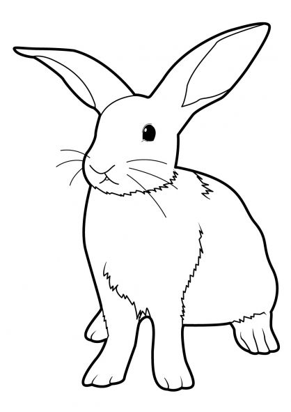 coloriage lapin 3