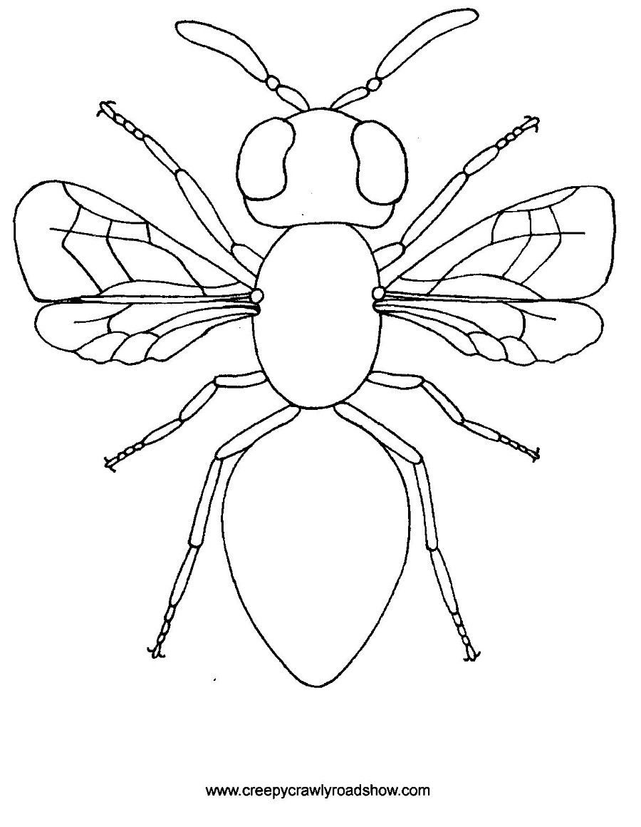 the creepy crawlies show colouring pages - Insect Coloring Pages