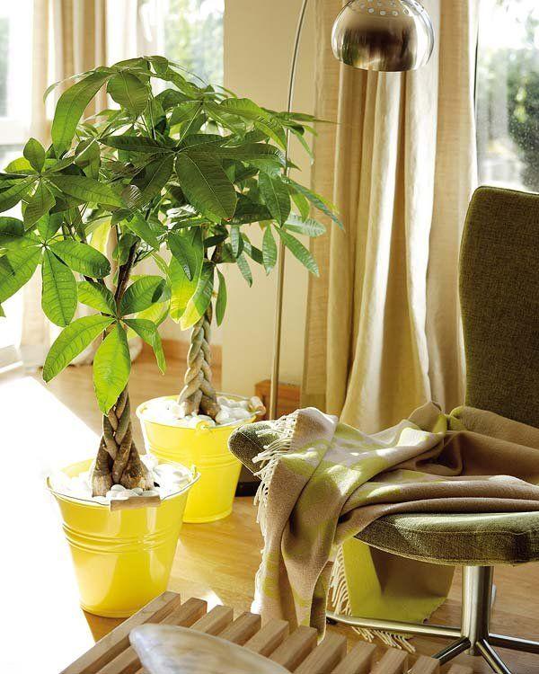 Plantas para decorar interiores plantas para decorar for Macetas interiores decoracion