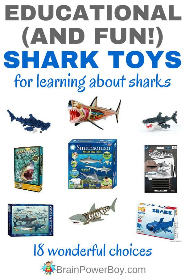Educational Shark Toys for Learning About Sharks   Keeping ...