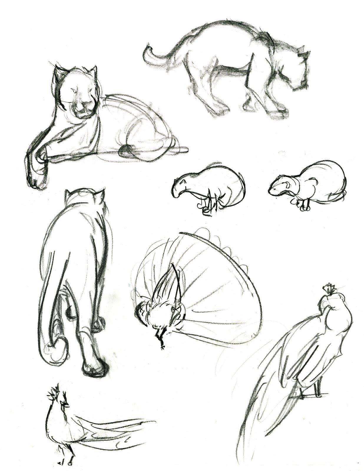cat drawings | Tick Tock: Big Cats | Art sketches and drawings ...