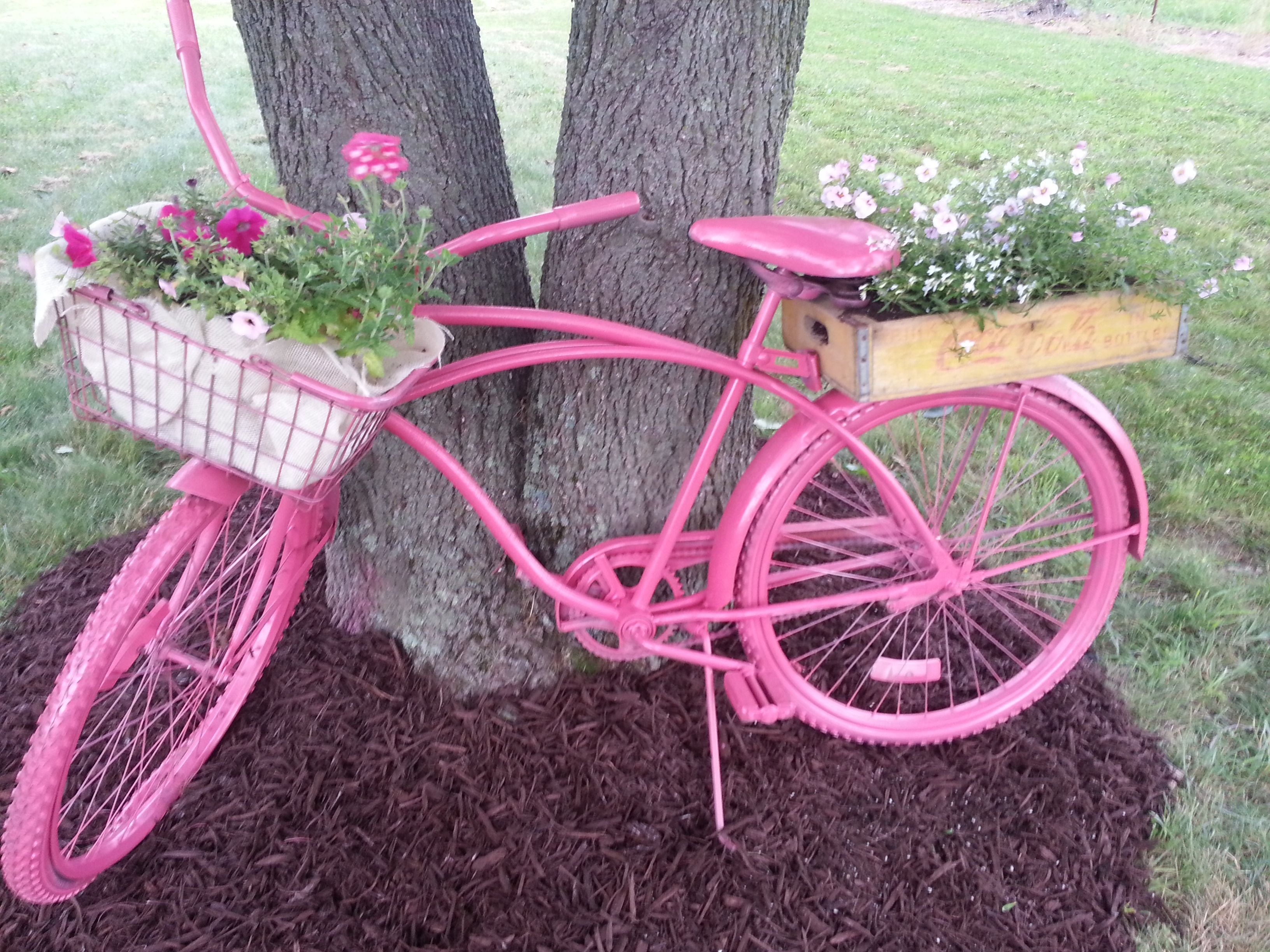 Pink garden bicycle :-) (End of Our Country Road )