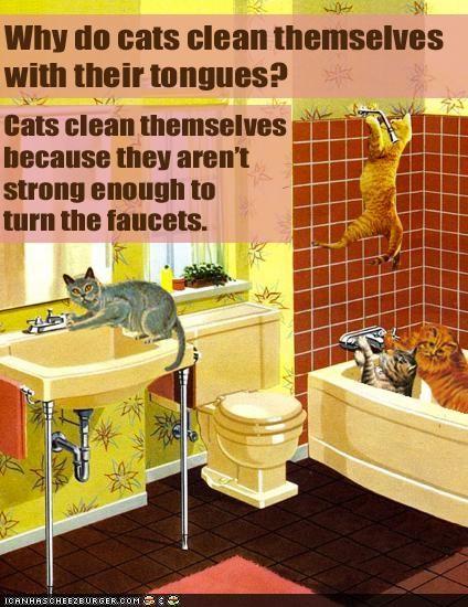 cats faucets bathroom
