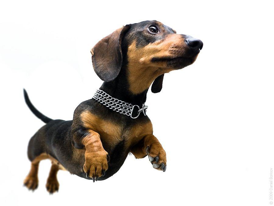 super dogg
