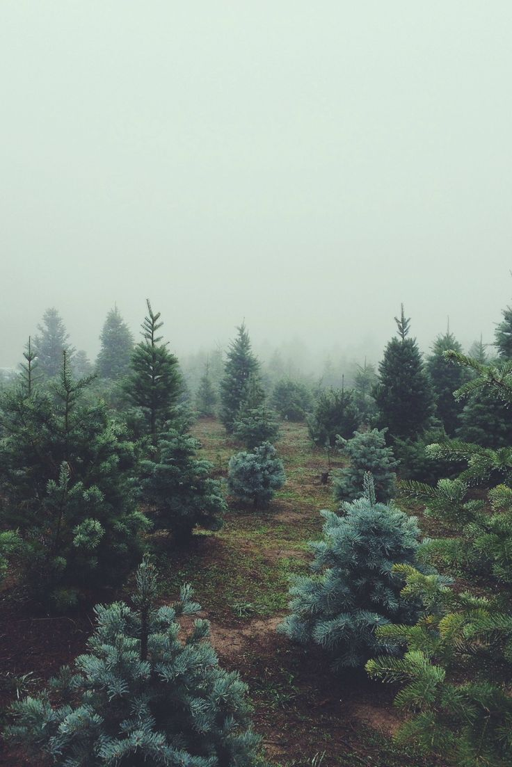 Photo of .woodlands Fernweh Landschaft Reise Himmel Strand Wanderung Paris …